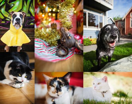 Fetch_Stock_dogs_cats_web_composite1 by .