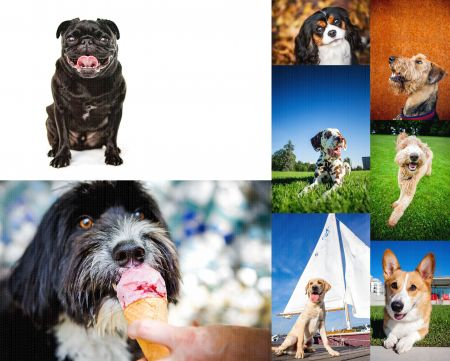 Fetch_Stock_dogs_web_composite1 by .