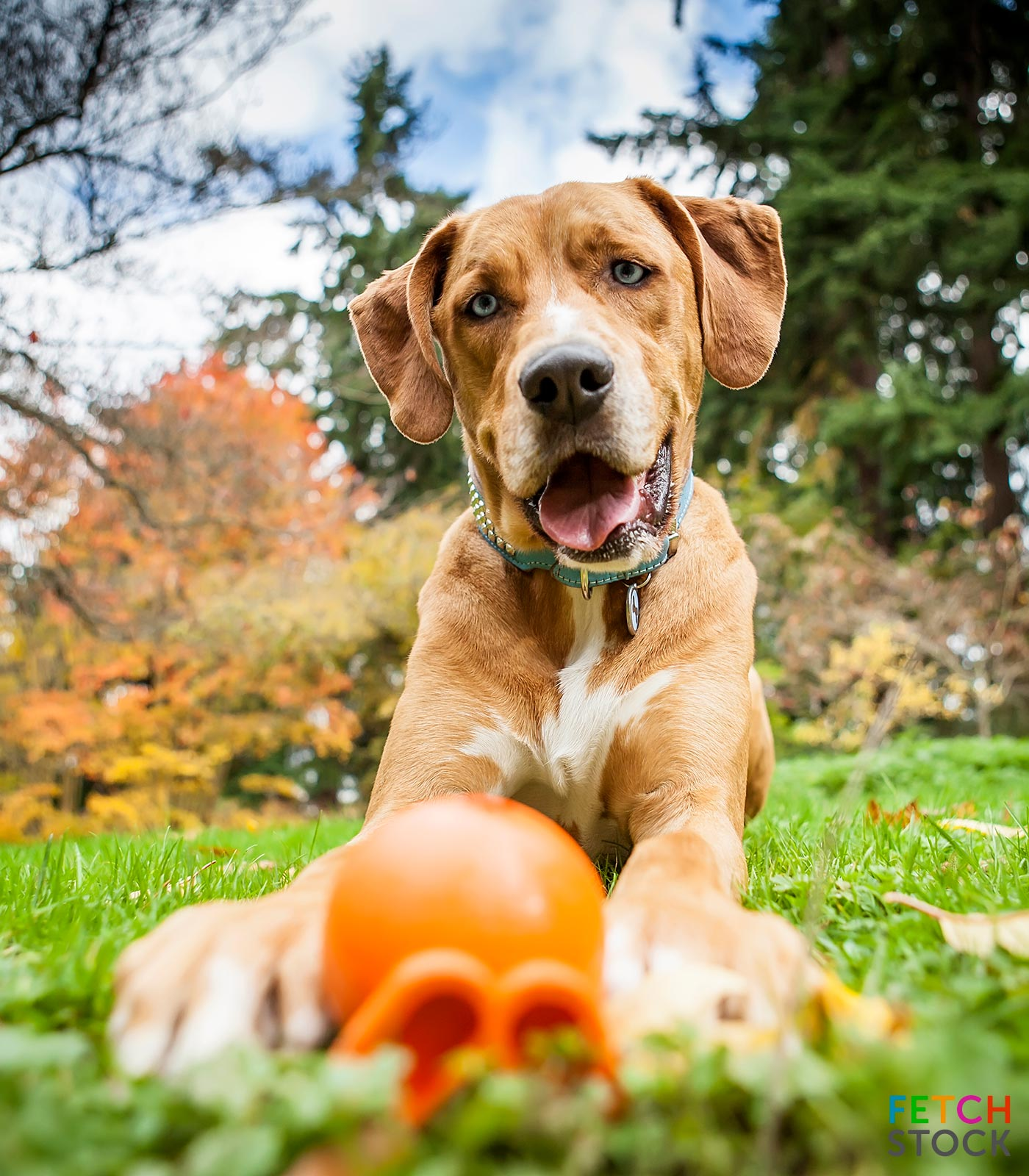 Fetch_Stock_PP2817_thumb_watermark by Copyright Jamie Piper..