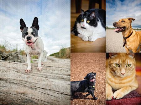 Fetch_Stock_Economy_dogs_cats_print_composite1 by .