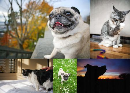 Fetch_Stock_Economy_dogs_cats_web_composite1 by .