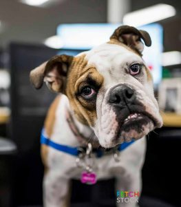 Office Dogs Editorial Use