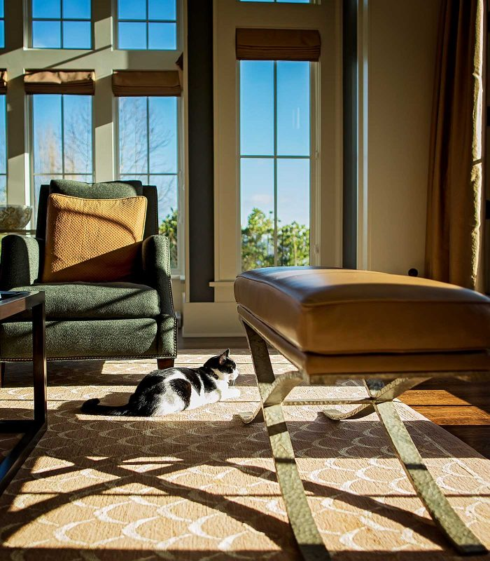 Fetch Stock cat laying in sun stock cat photo by Jamie Piper