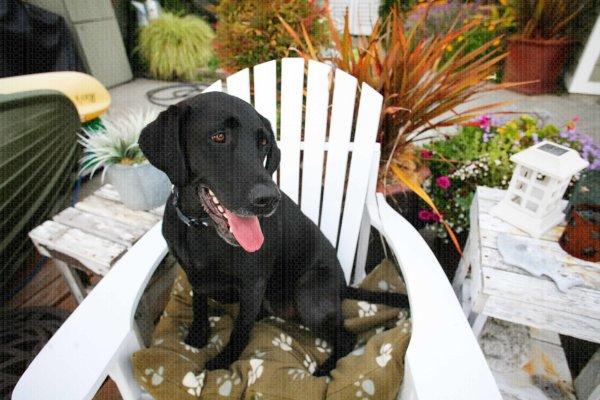 Fetch Stock beach house black lab dog photo   stock dog photo by Jamie Piper