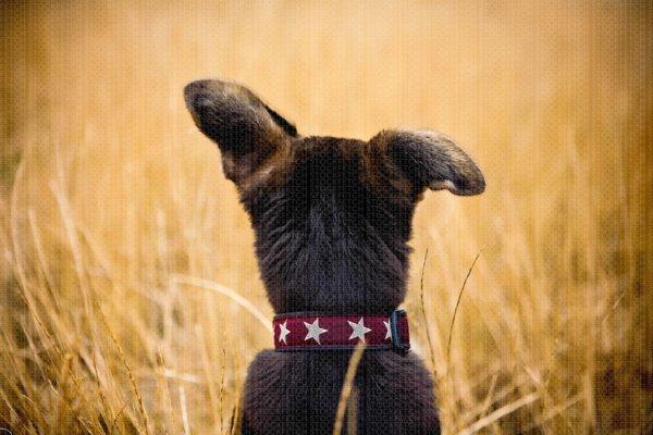 Stock Dog Photo // Stock Dog Image by Jamie Piper.
