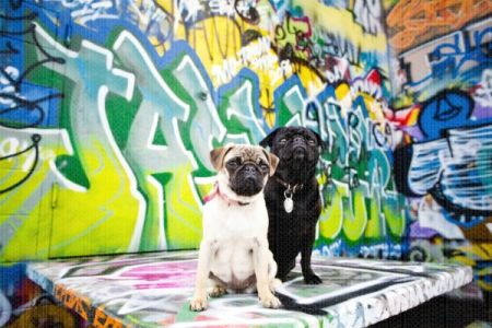 Fetch Stock graffiti Pugs stock dog photo by Jamie Piper