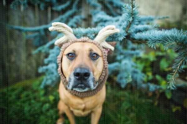 Fetch Stock Lab Mix in reindeer antlers snood stock dog photo by Jamie Piper
