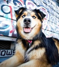 Fetch_Stock_Urban_Dogs_thumb_home by Copyright Cowbelly Pet Photography.