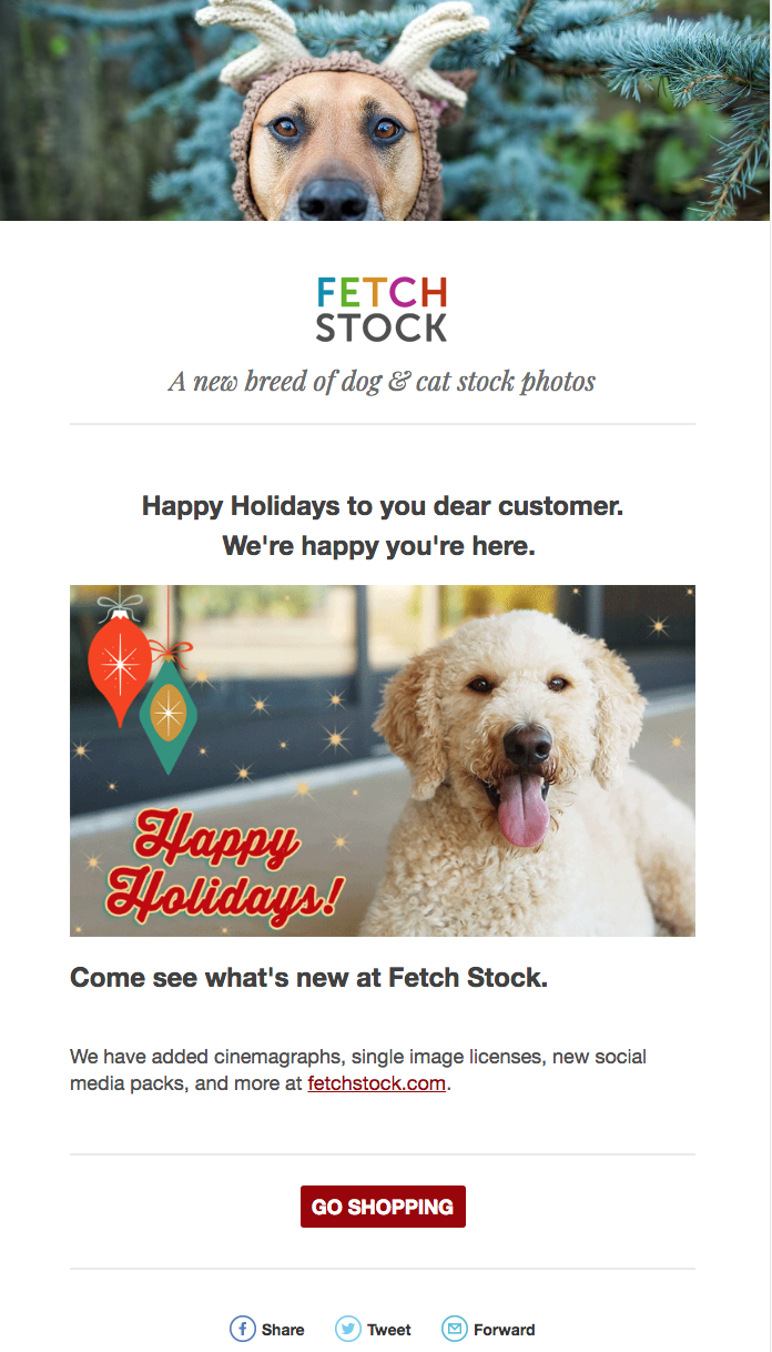 stock dog cinemagraph by fetch stock
