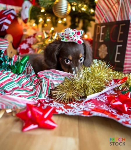 Daschund_Puppy_Christmas_Tinsel_thumb