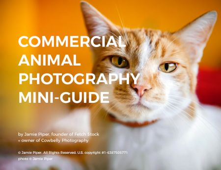 commercial animal photography guide