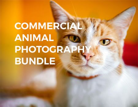 commercial-animal-photography-bundle